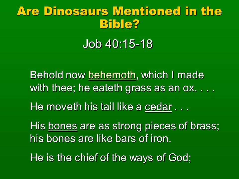 Are Dinosaurs Mentioned in the Bible