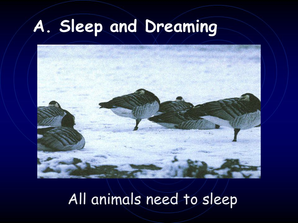 A. Sleep and Dreaming All animals need to sleep