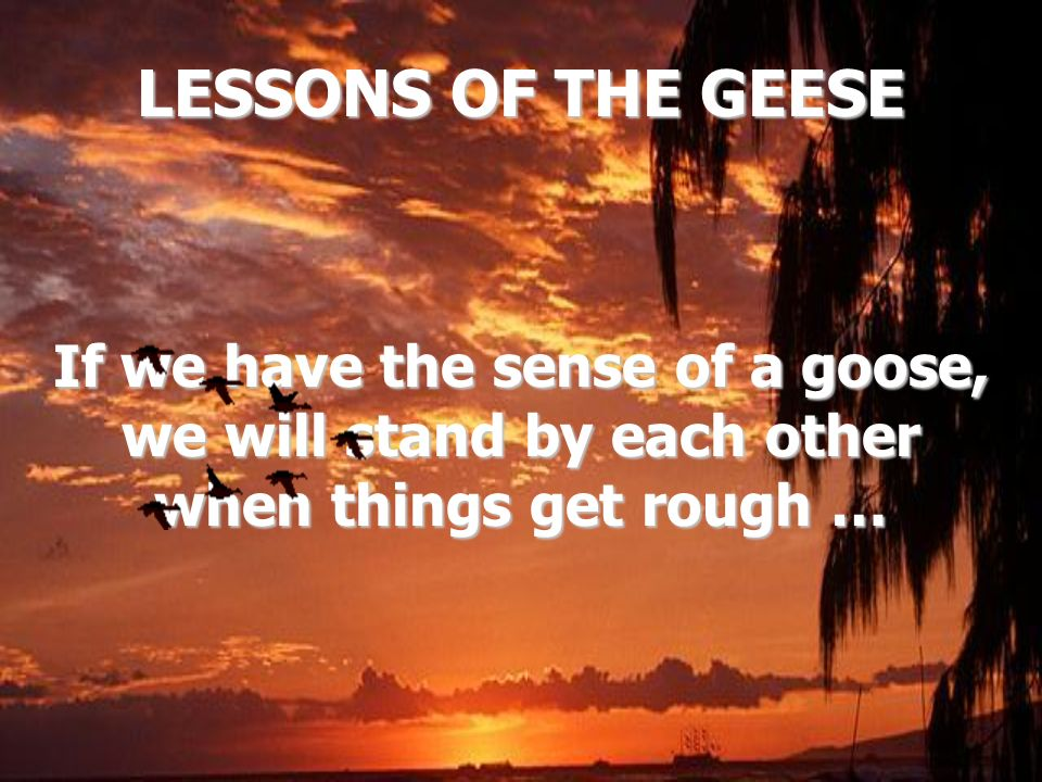 LESSONS OF THE GEESE If we have the sense of a goose, we will stand by each other when things get rough …