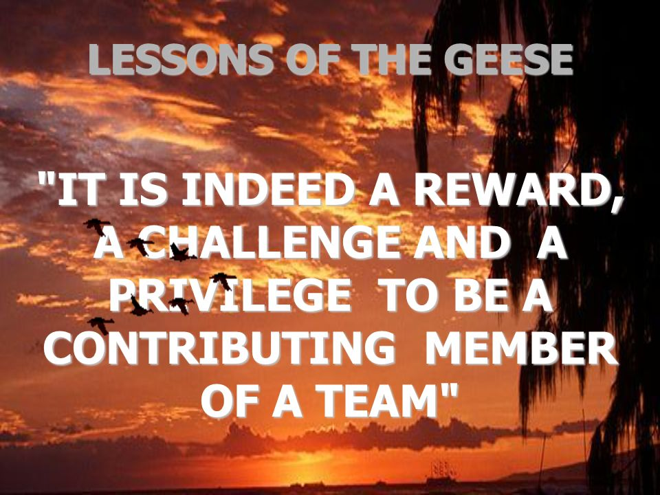 LESSONS OF THE GEESE IT IS INDEED A REWARD, A CHALLENGE AND A PRIVILEGE TO BE A CONTRIBUTING MEMBER OF A TEAM
