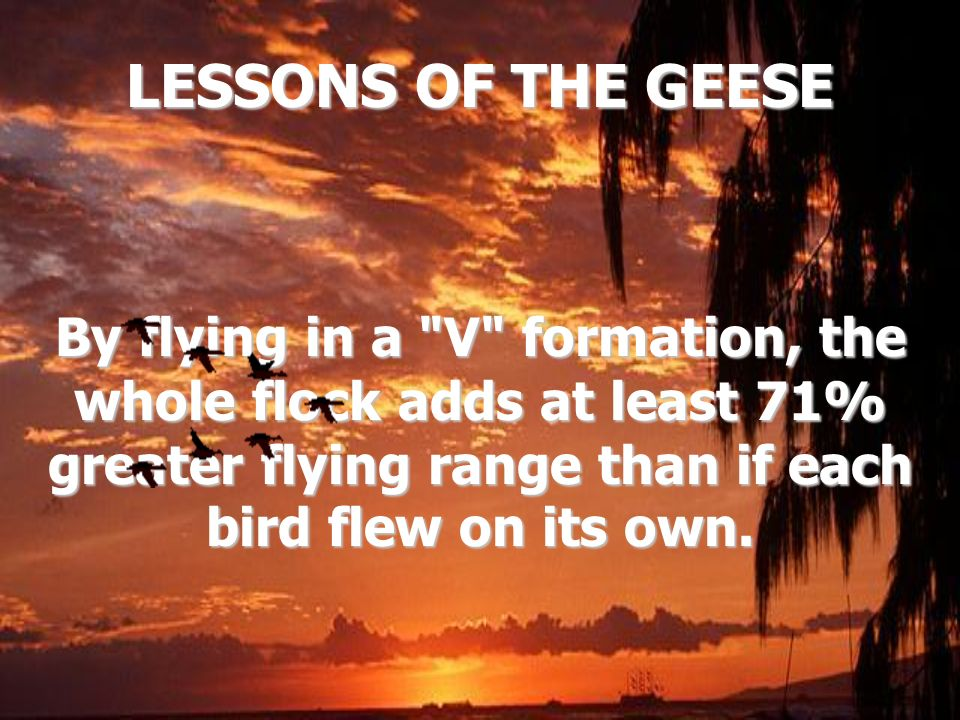 LESSONS OF THE GEESE By flying in a V formation, the whole flock adds at least 71% greater flying range than if each bird flew on its own.