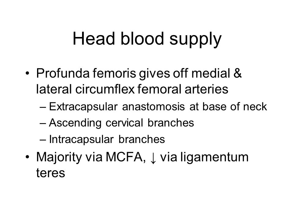 Head blood supply Profunda femoris gives off medial & lateral circumflex femoral arteries. Extracapsular anastomosis at base of neck.