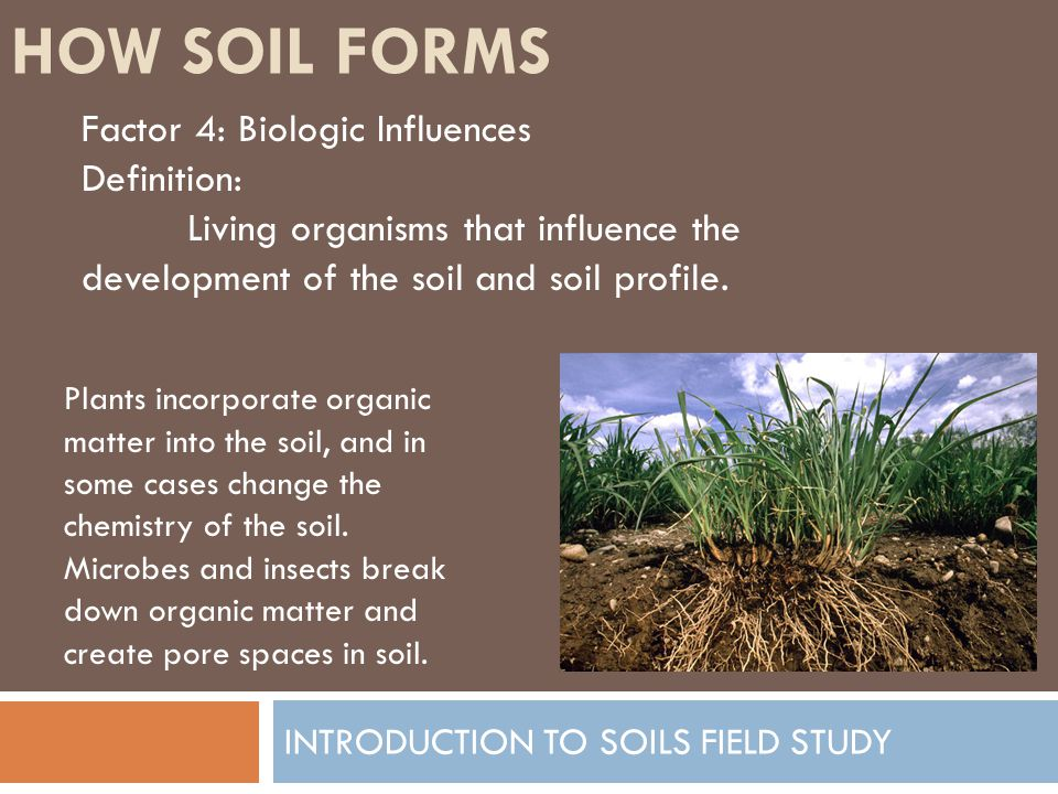 Introduction to soils field study ppt video online download for Soil development definition