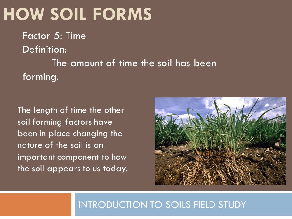 Introduction to soils field study ppt video online download for Meaning of soil formation