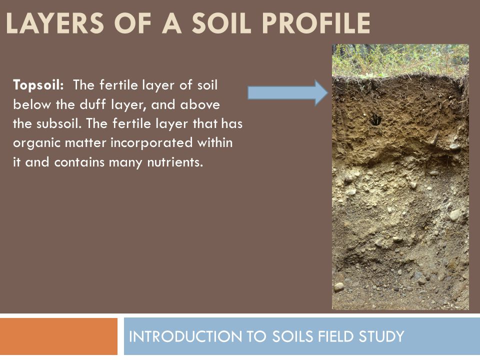 a study of soil Soil ecologists study the soil ecosystem in a variety of ways what all of these ways have in common is that they rely on careful observation and measurement.