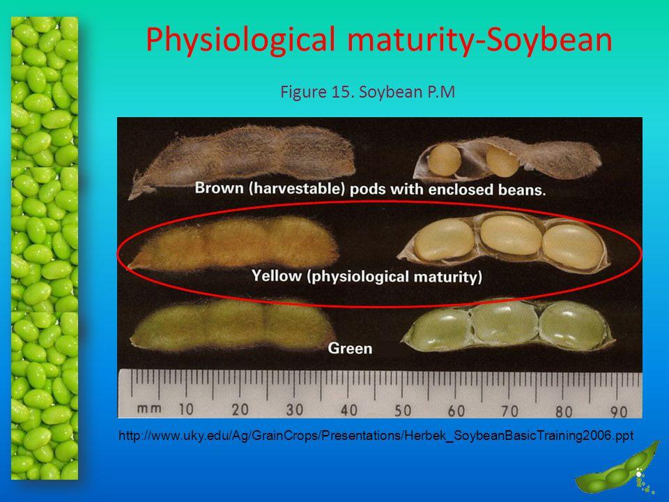 Physiological maturity-Soybean
