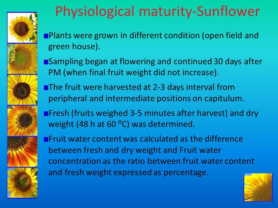 Physiological maturity-Sunflower