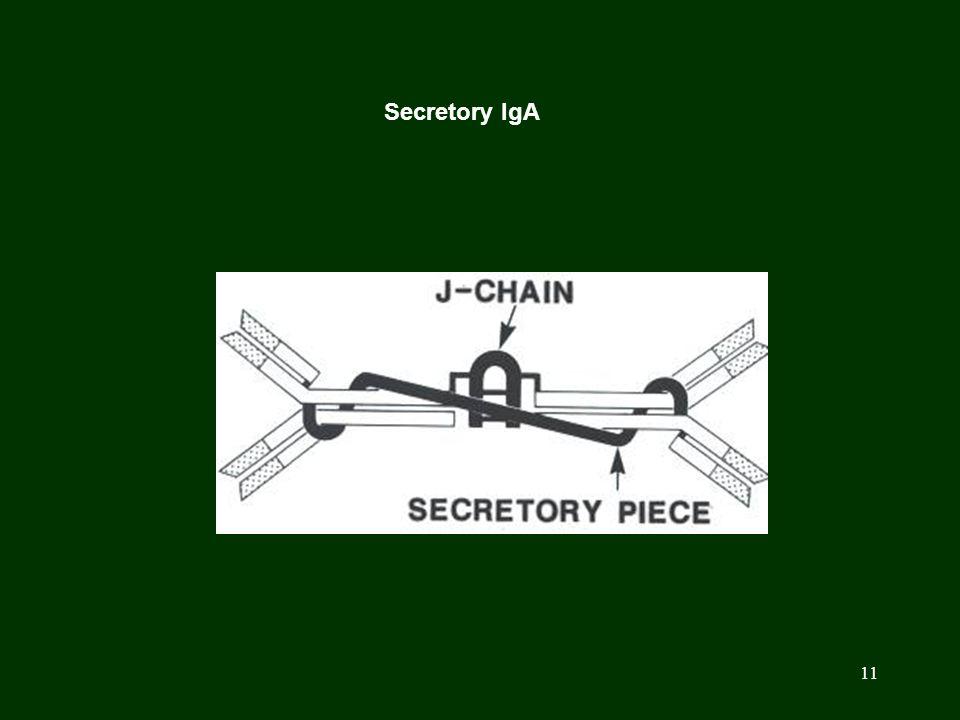 Secretory IgA