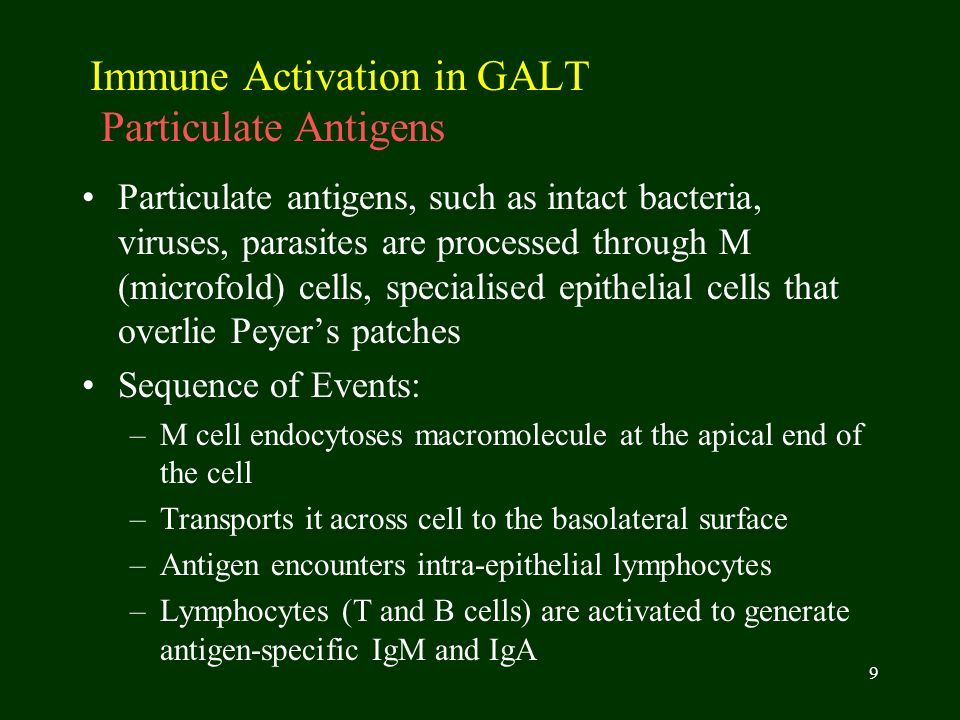 Immune Activation in GALT Particulate Antigens