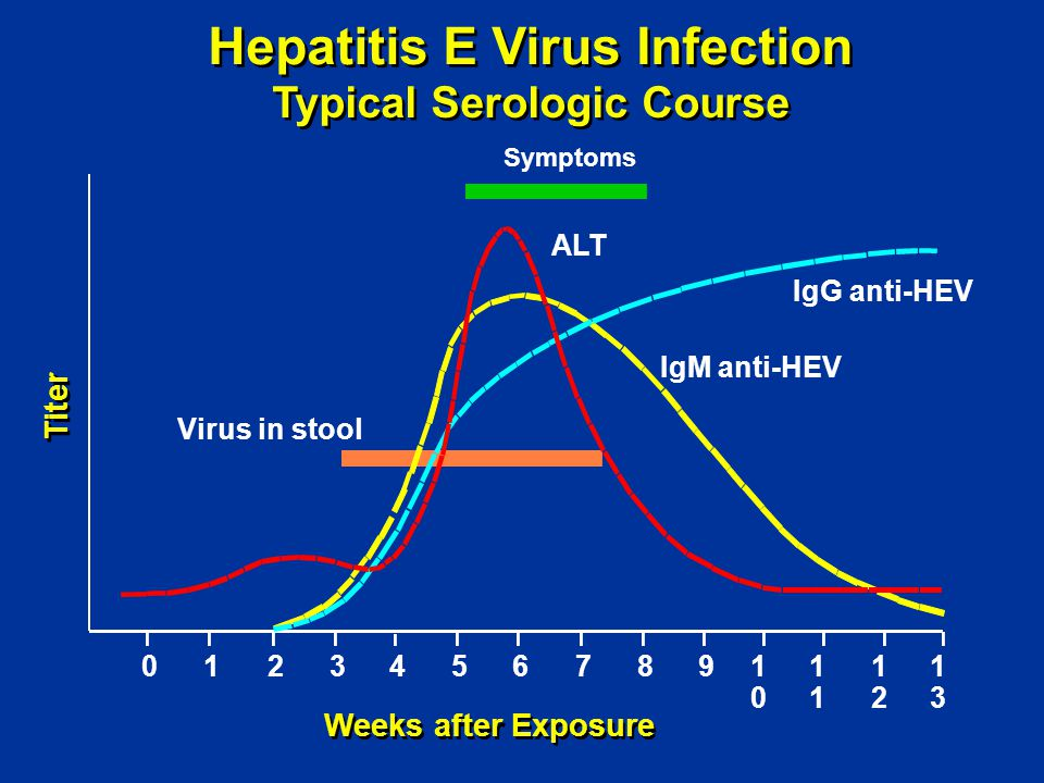 Hepatitis E Virus Infection