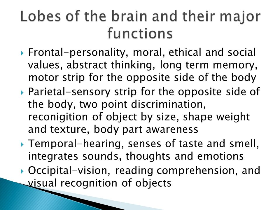 Lobes of the brain and their major functions