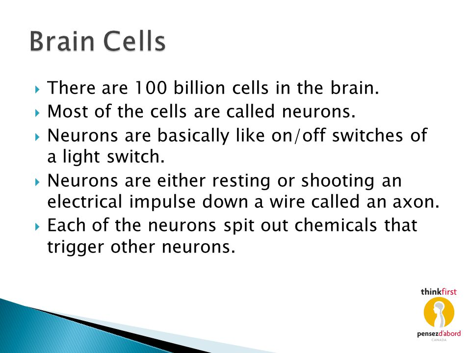 Brain Cells There are 100 billion cells in the brain.