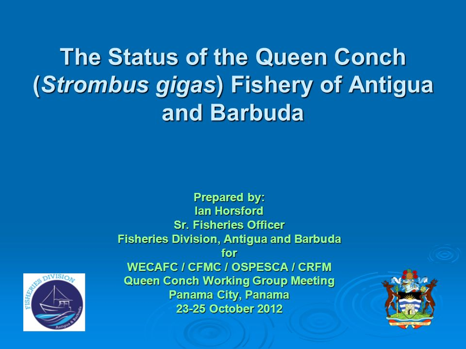 The Status of the Queen Conch (Strombus gigas) Fishery of Antigua and Barbuda
