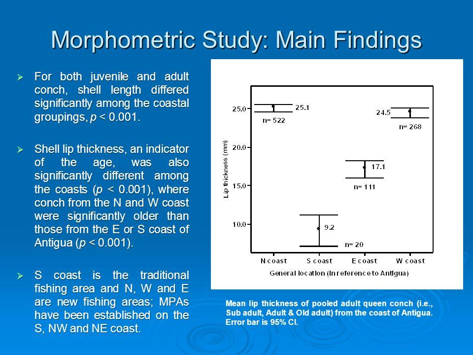 Morphometric Study: Main Findings