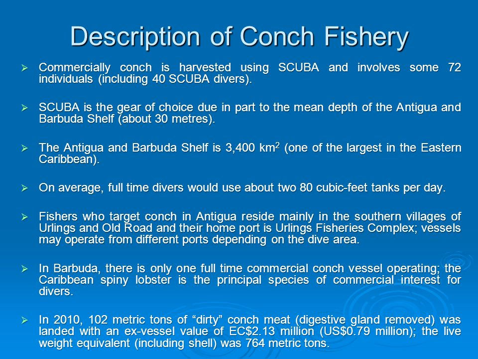 Description of Conch Fishery