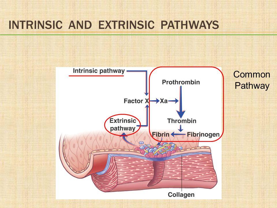 Intrinsic and Extrinsic Pathways