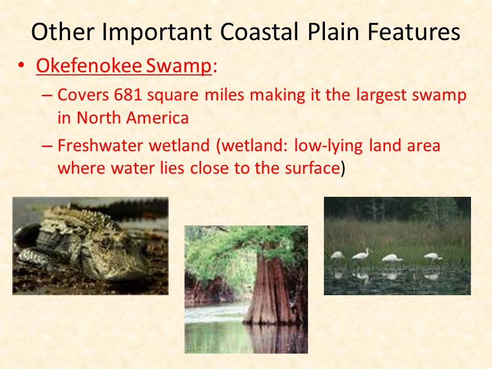 Other Important Coastal Plain Features