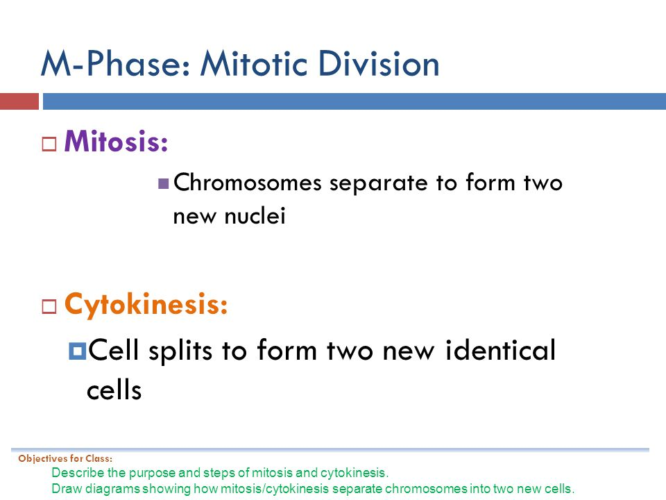 M-Phase: Mitotic Division