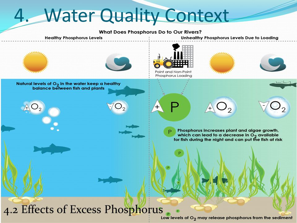 4. Water Quality Context 4.2 Effects of Excess Phosphorus