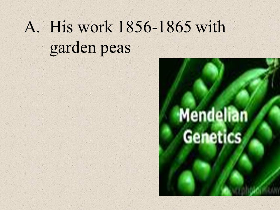 His work 1856-1865 with garden peas