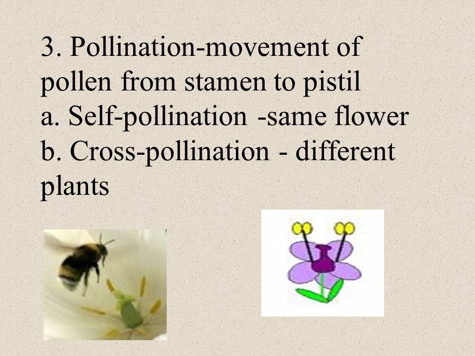 3. Pollination-movement of pollen from stamen to pistil a