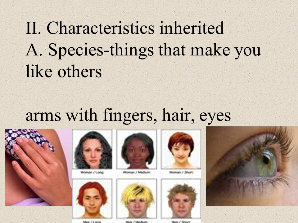 II. Characteristics inherited A