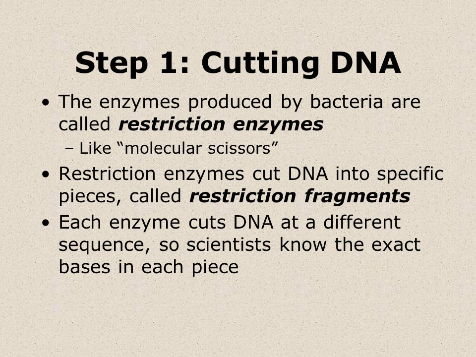 Step 1: Cutting DNAThe enzymes produced by bacteria are called restriction enzymes. Like molecular scissors