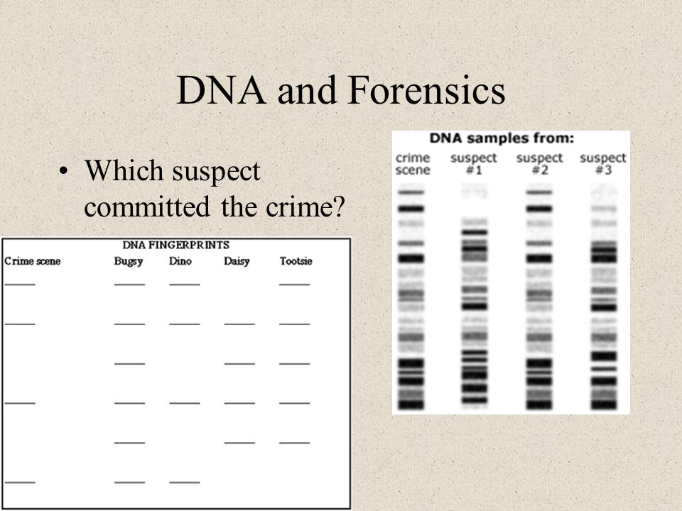DNA and Forensics Which suspect committed the crime