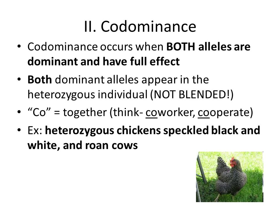 II. Codominance Codominance occurs when BOTH alleles are dominant and have full effect.