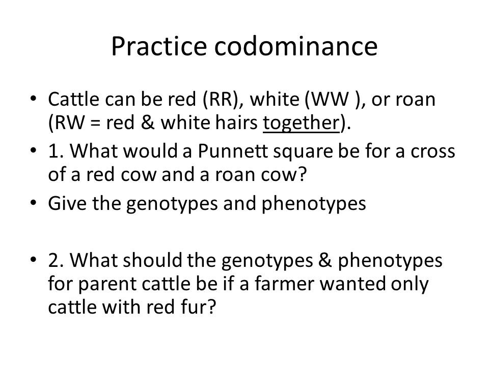 Practice codominance Cattle can be red (RR), white (WW ), or roan (RW = red & white hairs together).