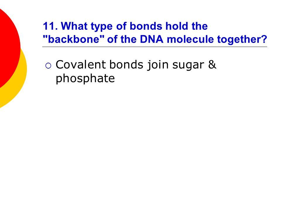 Covalent bonds join sugar & phosphate