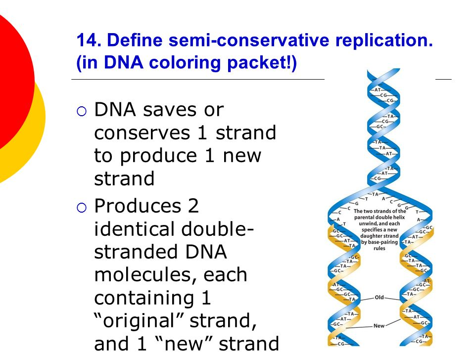 DNA, RNA and Protein Synthesis Review - ppt video online download