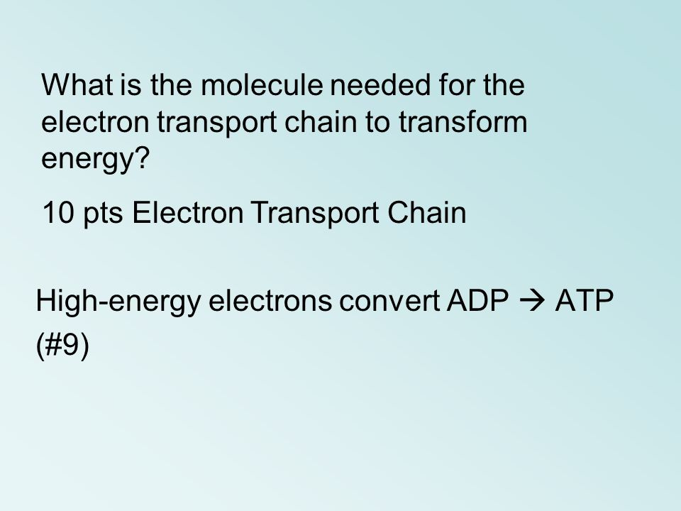 What is the molecule needed for the electron transport chain to transform energy