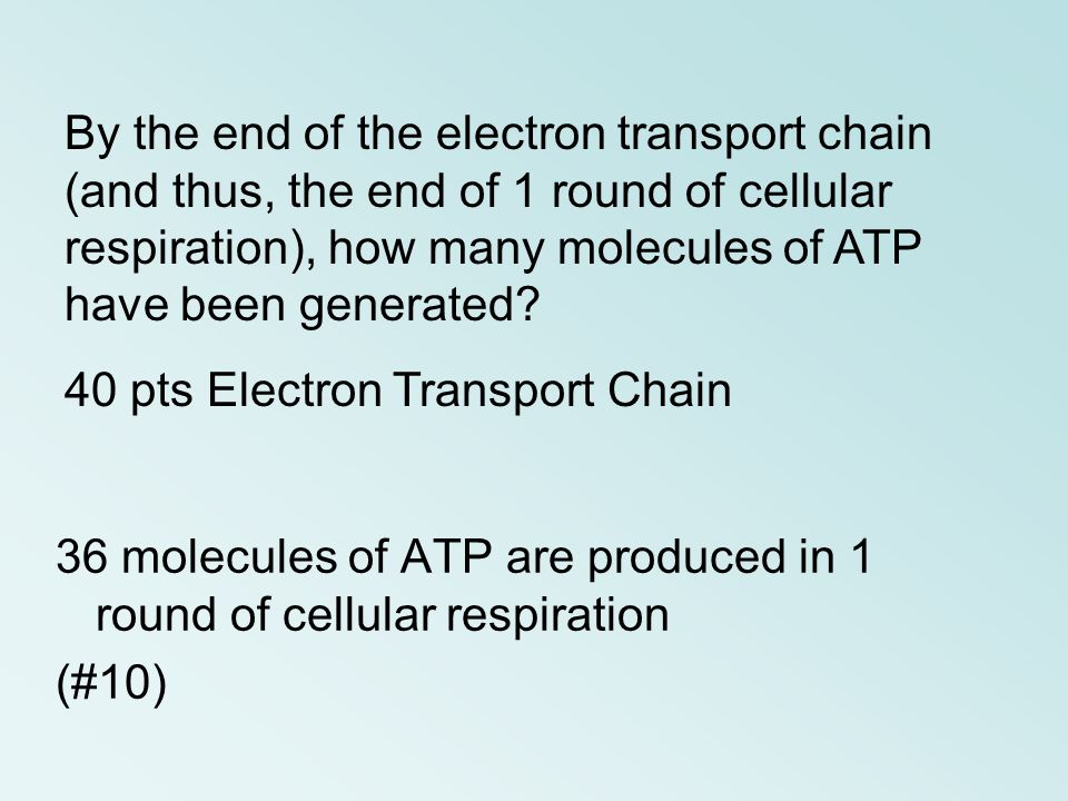 By the end of the electron transport chain (and thus, the end of 1 round of cellular respiration), how many molecules of ATP have been generated