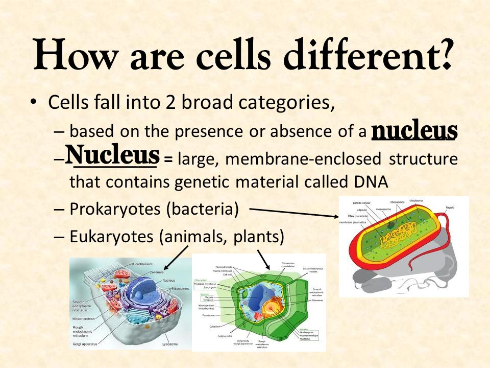 How are cells different
