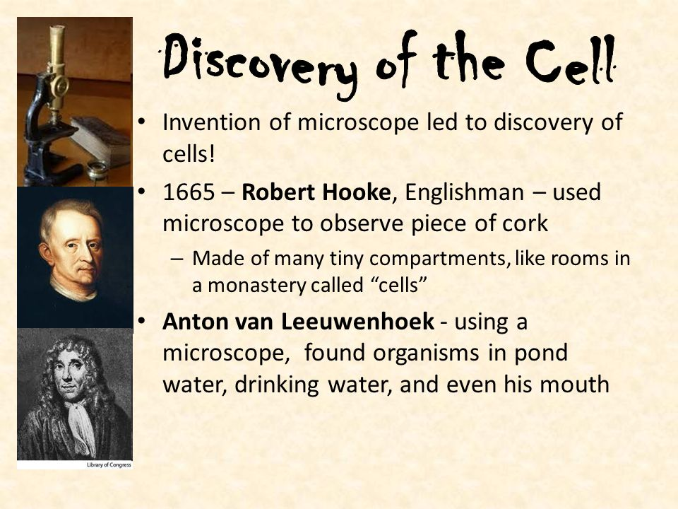 Discovery of the Cell Invention of microscope led to discovery of cells! 1665 – Robert Hooke, Englishman – used microscope to observe piece of cork.