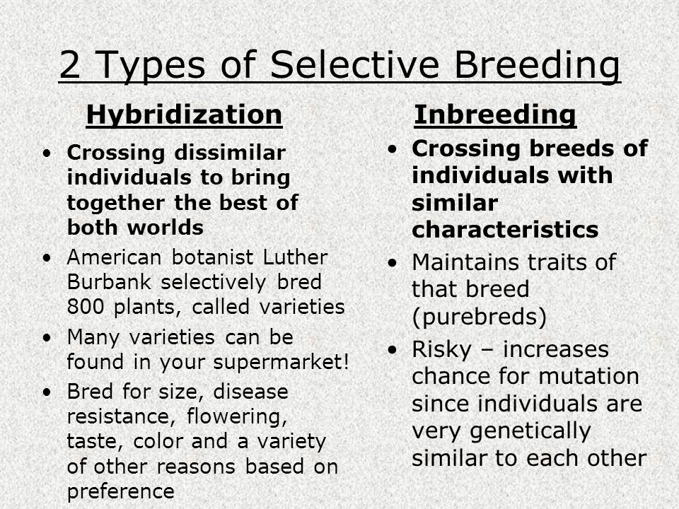 2 Types of Selective Breeding