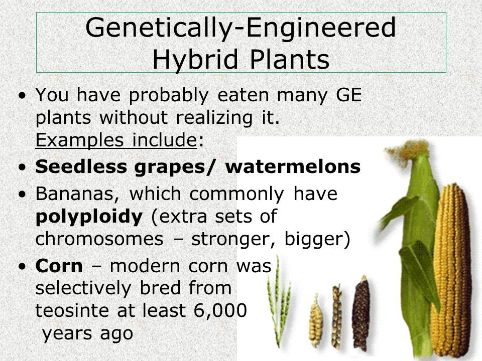 Genetically-Engineered Hybrid Plants