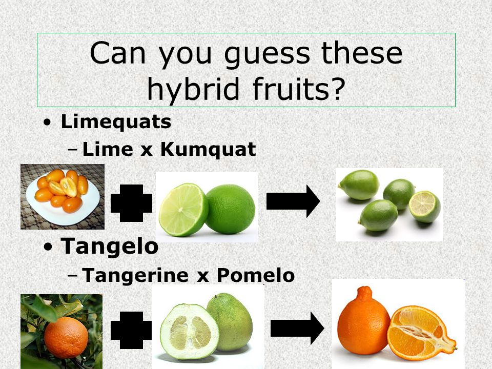Can you guess these hybrid fruits