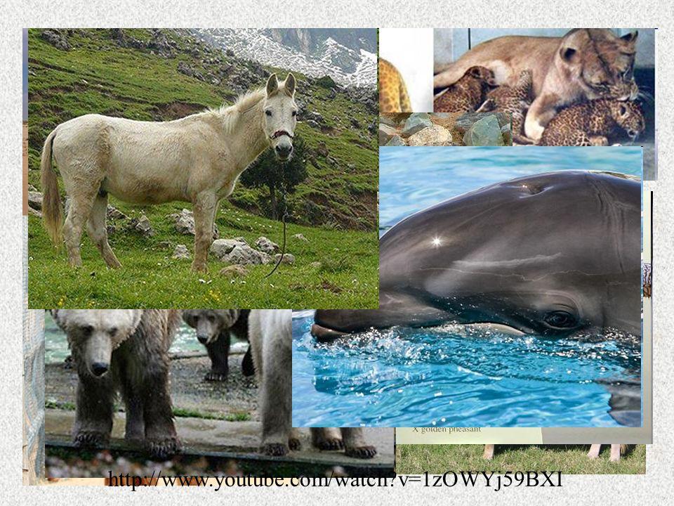 Hybridization Hybridized animals are called hybrids