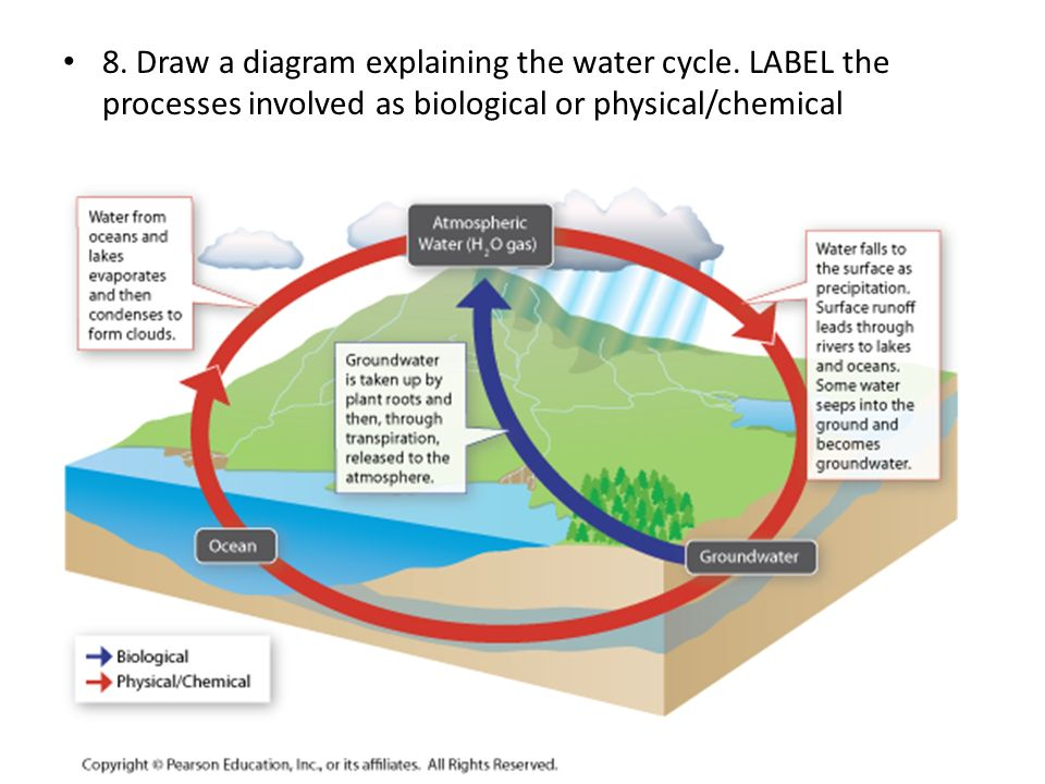 8. Draw a diagram explaining the water cycle