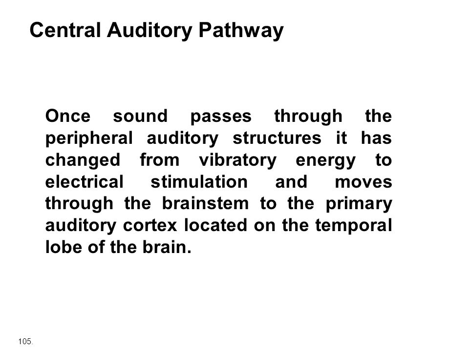 Central Auditory Pathway
