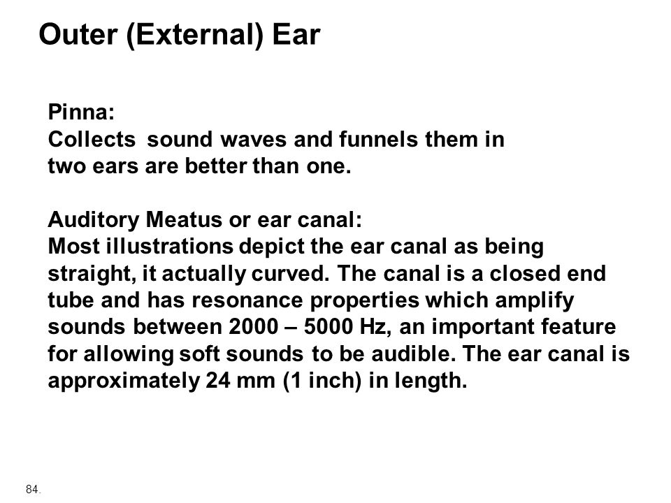 Outer (External) Ear Pinna: Collects sound waves and funnels them in