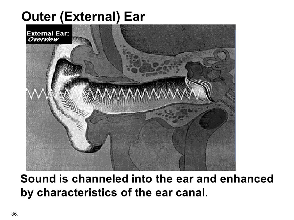Outer (External) Ear Sound is channeled into the ear and enhanced by characteristics of the ear canal.
