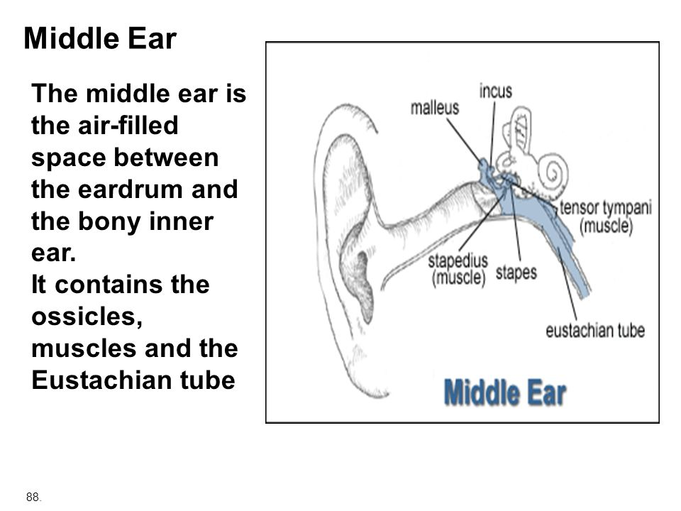 Middle Ear The middle ear is the air-filled space between the eardrum and the bony inner ear. It contains the.