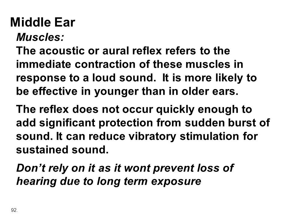 Middle Ear Muscles: