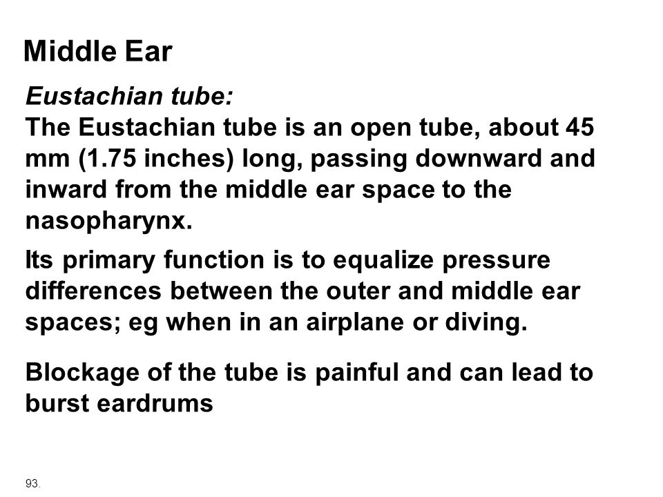 Middle Ear Eustachian tube: