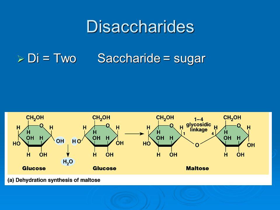 Disaccharides Di = Two Saccharide = sugar