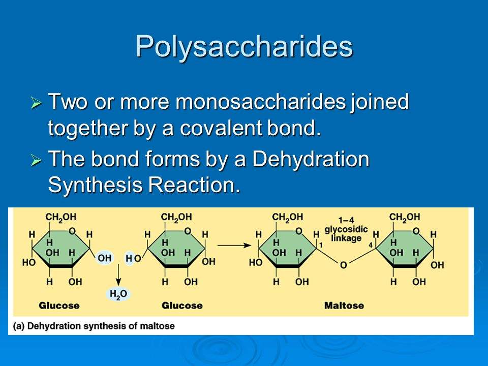 Polysaccharides Two or more monosaccharides joined together by a covalent bond.