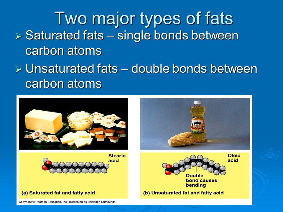 Two major types of fats Saturated fats – single bonds between carbon atoms.